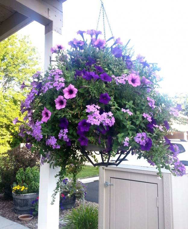 Hanging Basket by Author